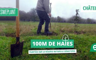 Plantation de 100m de haies à Châtelet